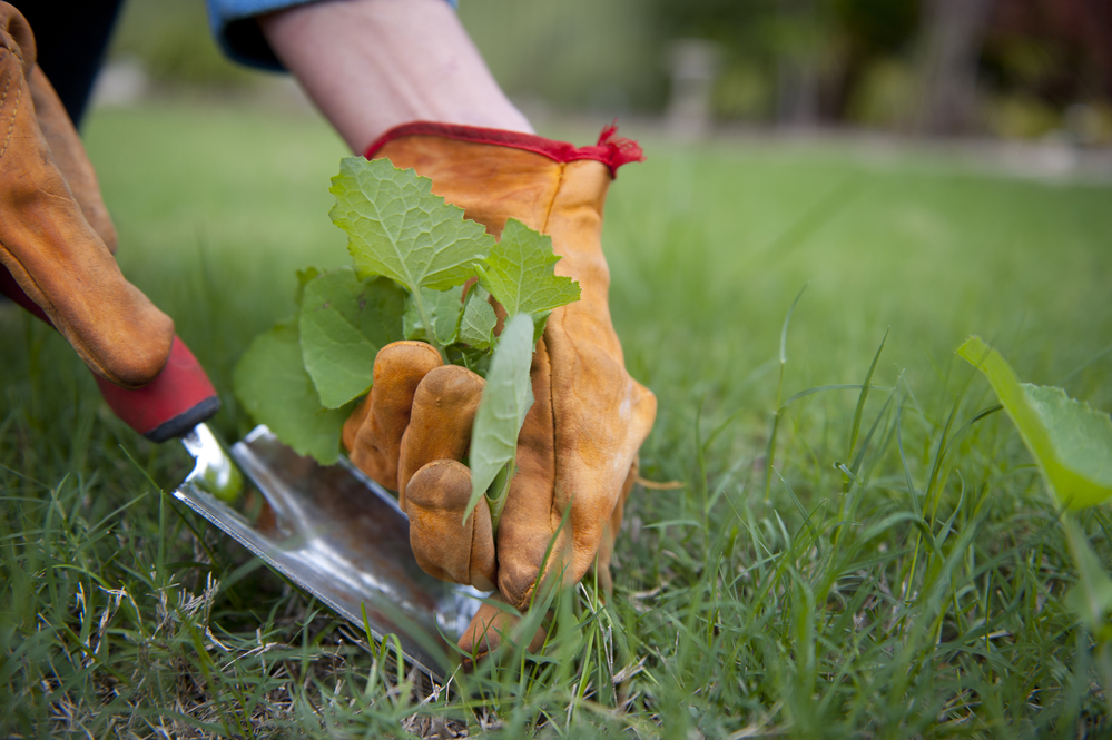 Spring weeding for garden and lawn care