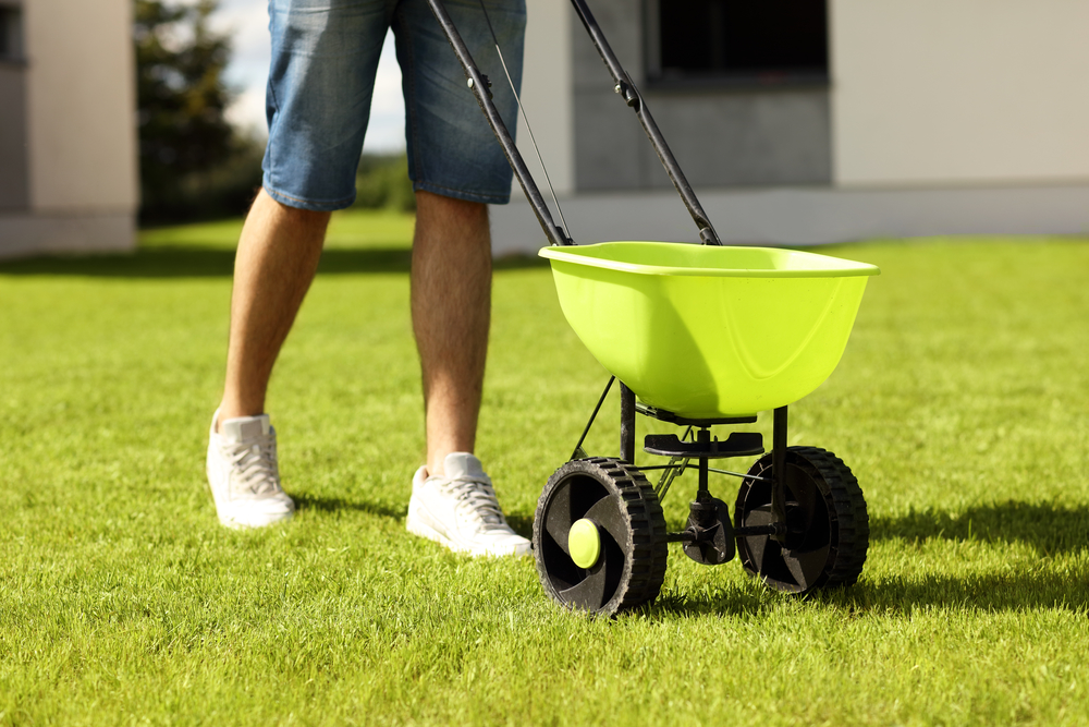 fertilize and seed in the spring