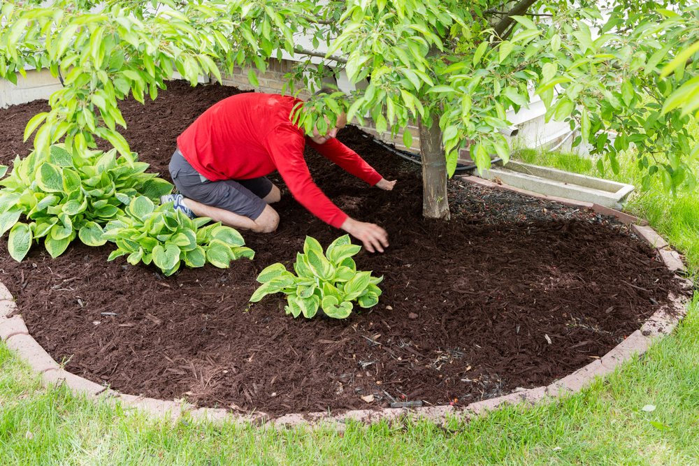 lay fresh mulch in the spring