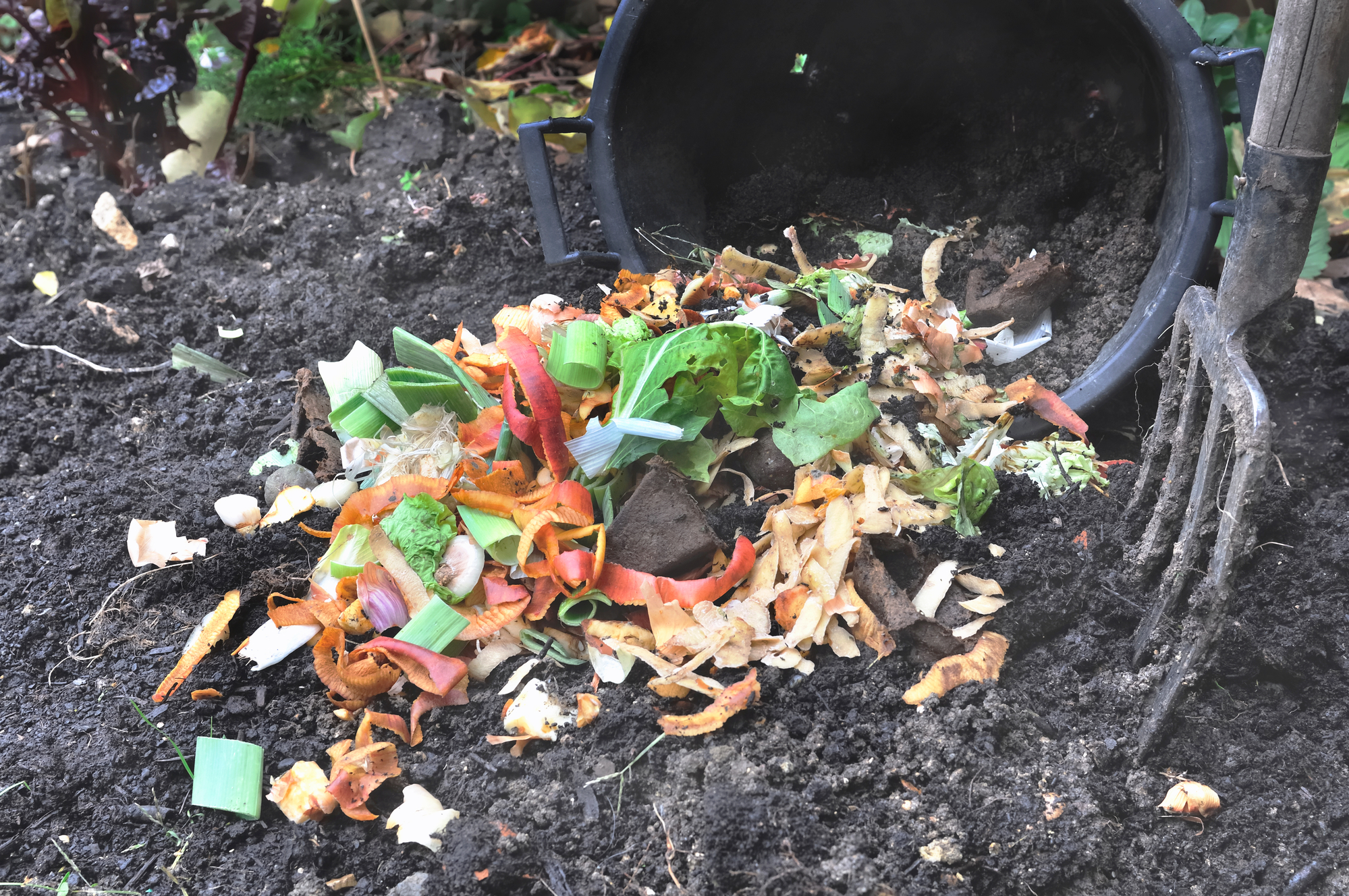 compost pile for a sustainable COVID yard